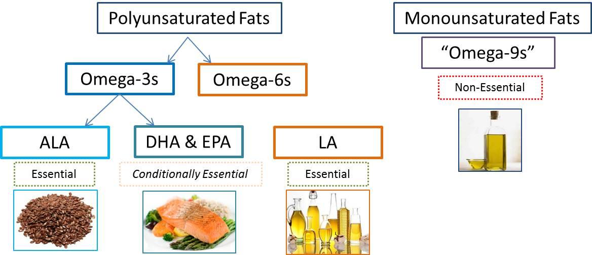 Essential Omega Fatty Acids